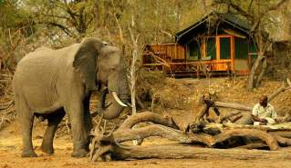 elephant-in-front-of-camp