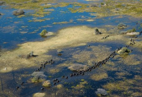 Elephants in the inundation