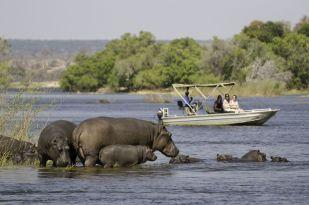 Hippo-Okavango-Delta-Animals