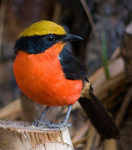 Il Mondo degli Uccelli
