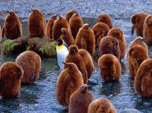 king-penguins-south-georgia-island_22661_990x742