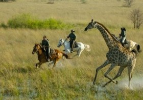 Macatoo-horseback-safari-439x307