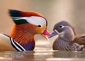 Mandarin Duck - Aix galericulata - couple by Stefano Ronchi