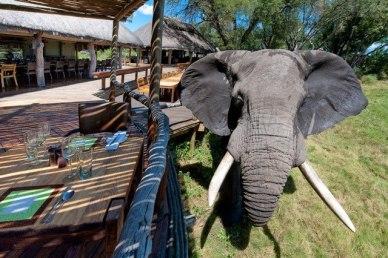 Mombo Camp, Okavango Delta, Botswana