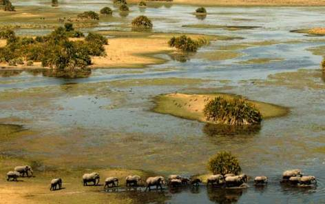 okavango-delta (1)