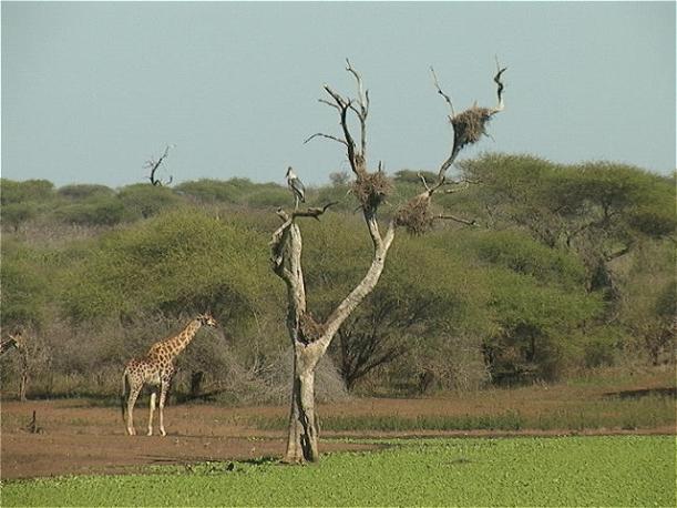 Okavango-Delta-Botswana