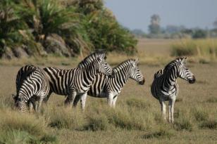 Okavango Delta Botswana_20090422163220