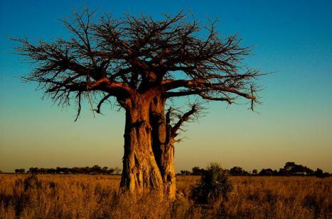 Okavango-Delta1