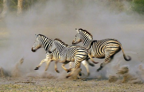 Okavango_Delta_045