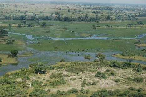 Okavango_Delta,_Botswana_(2674373339)