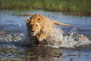 OkavangopustyinyaKalahariAfrika6