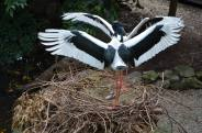 Our new stork family