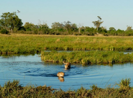 safari-in-the-mighty-okavango-delta