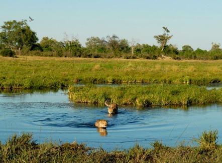 safari-in-the-mighty-okavango-delta