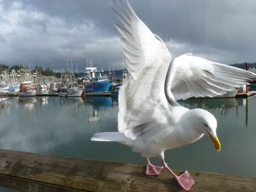 seagull-marina_36892_990x742