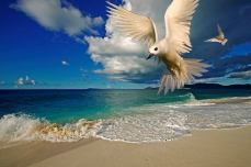 This fairy tern was captured in the Seychelles