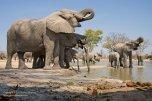 An elephantastic waterhole by Grant Atkinson