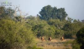 Bushveldt