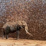 Elephant and quelia
