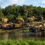 Herd at the waterhole