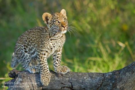 Image by Atkinson Photography and Safaris