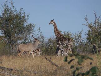 Kudu and mates