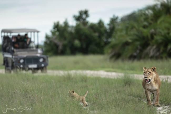 Magic in the Okavango Delta