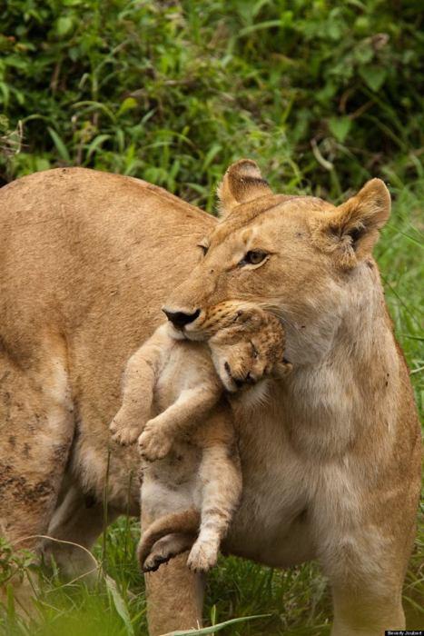 Masai Mara NR, Kenya. © Beverly Joubert
