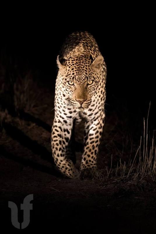 Night walker - Francois Malano