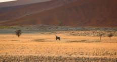 Sable - Sossusvlei May 2014