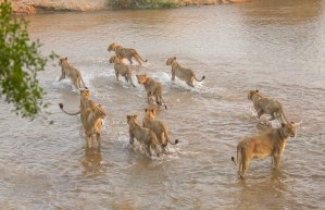 The mhangeni pride crossing the sand river