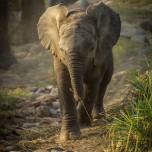 Young elephant in beautiful afternoon light
