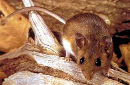 mouse3 e